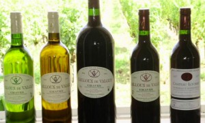 Grands vignobles Loubrie
